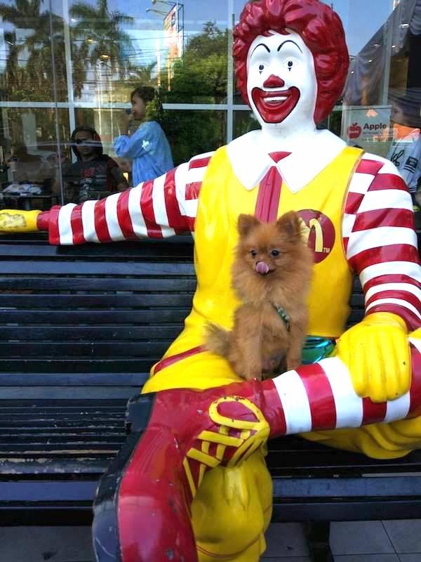 Shippo & Ronald McDonald