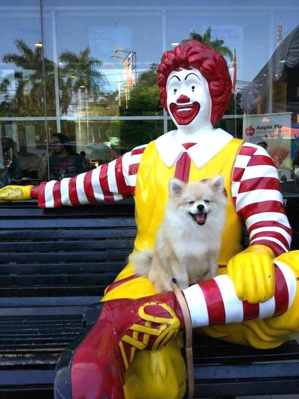 Sam & Ronald McDonald
