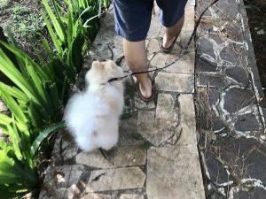 heytheregrace.com | Pet Park Bandung
