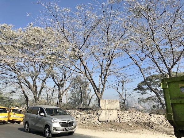 heytheregrace.com | Pohon Salju di Indonesia