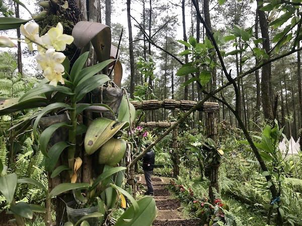 heytheregrace.com | Wood Gate at Orchid Forest Lembang 2