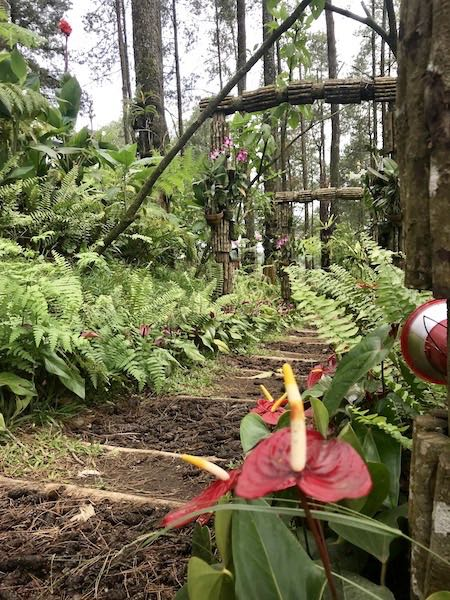 heytheregrace.com | Orchid Forest Lembang 4