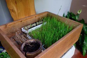 heytheregrace.com   Greens and Bean Bandung