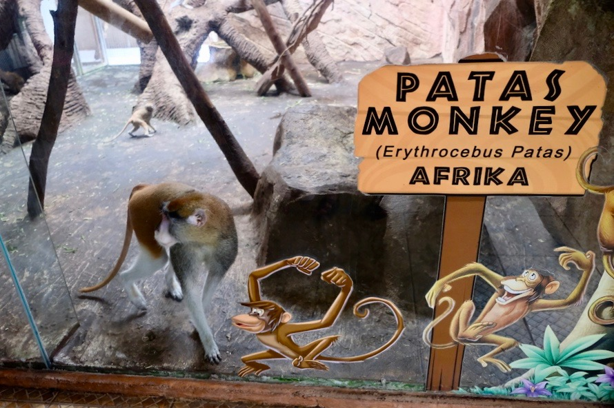 heytheregrace.com | Batu Secret Zoo, Jatim Park 2, Malang - Patas Monkey