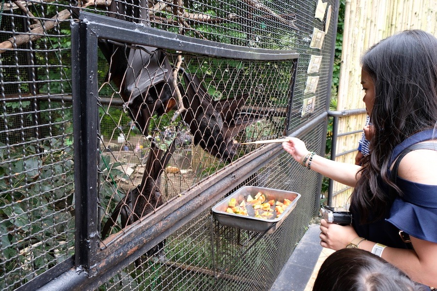 heytheregrace.com | Batu Secret Zoo, Jatim Park 2, Malang - Feeding bat
