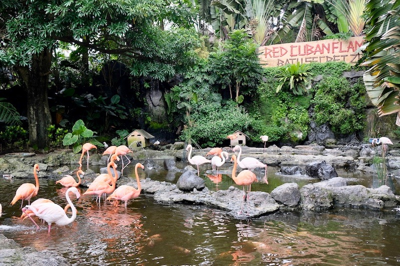 heytheregrace.com | Batu Secret Zoo, Jatim Park 2, Malang - Red Cuban Flamingo