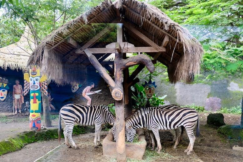 heytheregrace.com | Batu Secret Zoo, Jatim Park 2, Malang - Zebra