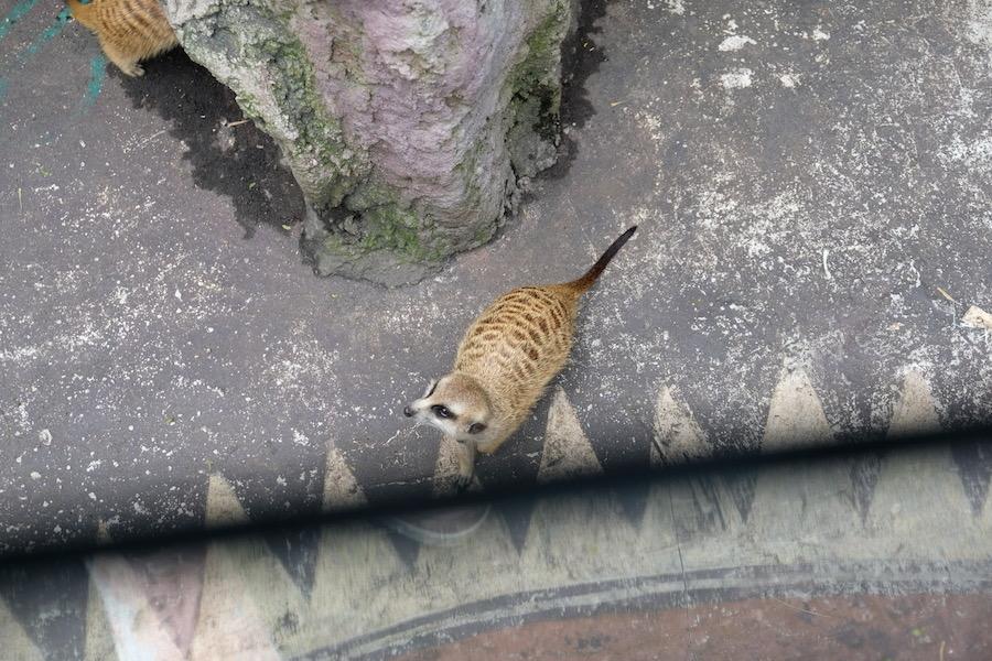 heytheregrace.com | Batu Secret Zoo, Jatim Park 2, Malang