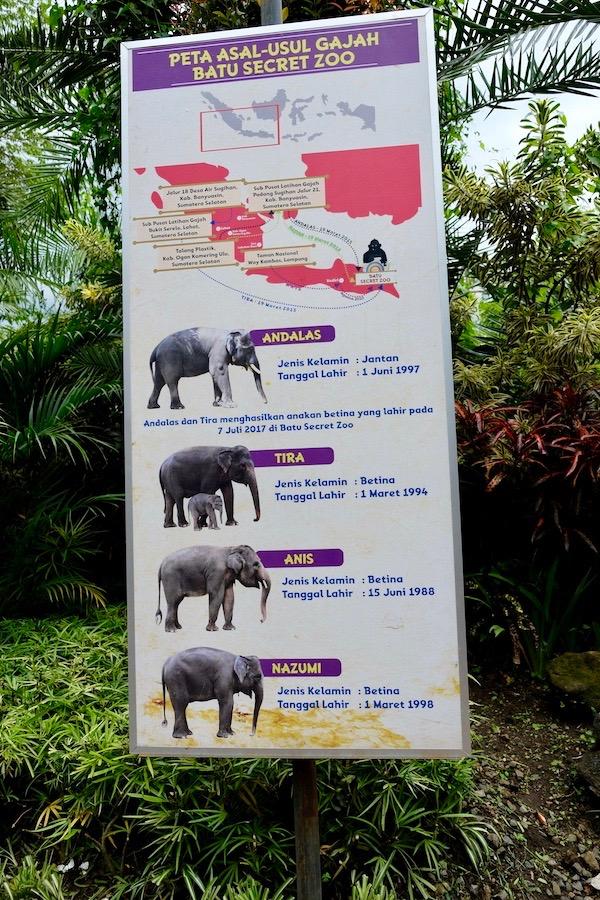heytheregrace.com | Batu Secret Zoo, Jatim Park 2, Malang - Gajah