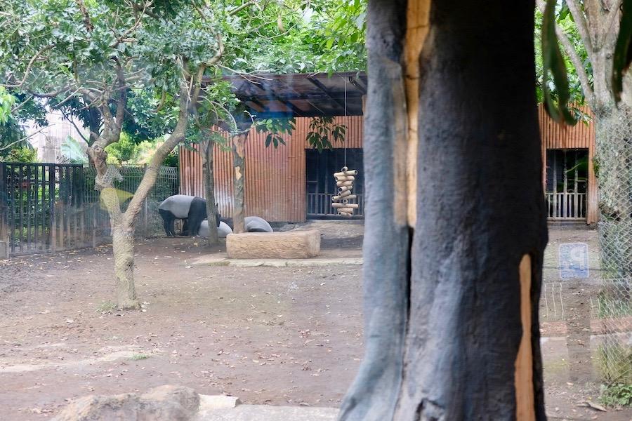 heytheregrace.com | Batu Secret Zoo, Jatim Park 2, Malang - Tapir