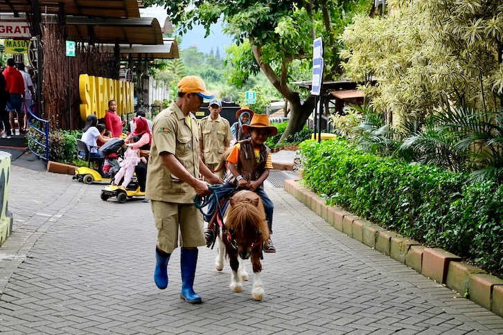 heytheregrace.com | Batu Secret Zoo, Jatim Park 2, Malang - Pony Riding
