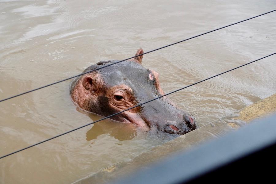 heytheregrace.com | Batu Secret Zoo, Jatim Park 2, Malang | Safari Farm | Kuda Nil