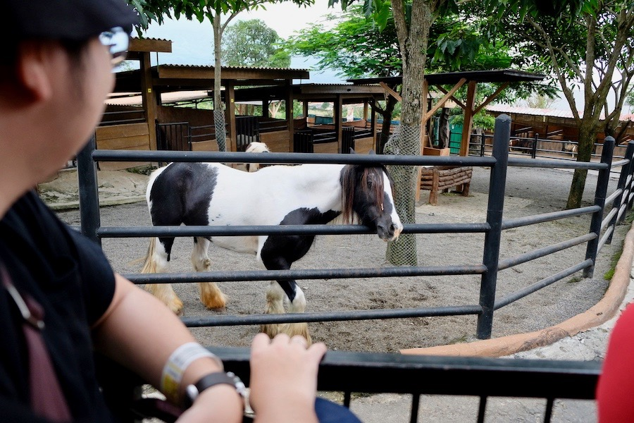 heytheregrace.com | Batu Secret Zoo, Jatim Park 2, Malang | Safari Farm