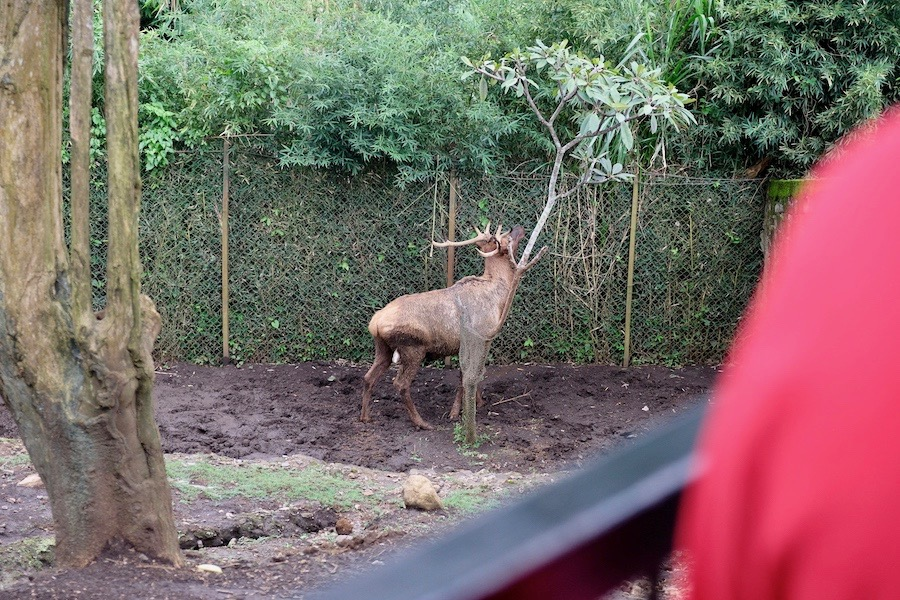 heytheregrace.com | Batu Secret Zoo, Jatim Park 2, Malang | Safari Farm | Elk