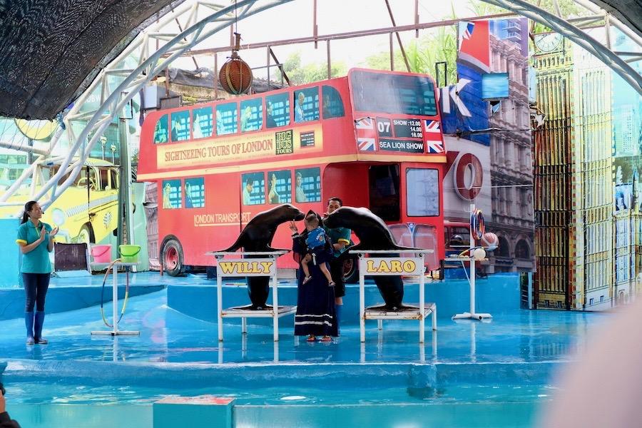 heytheregrace.com | Batu Secret Zoo, Jatim Park 2, Malang | Willy & Laro Show | Pertunjukan Singa Laut