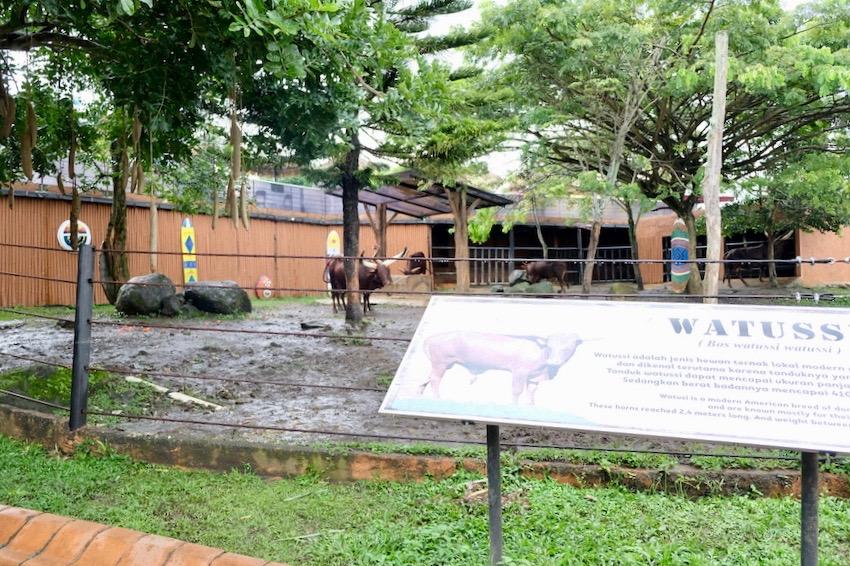 heytheregrace.com | Batu Secret Zoo, Jatim Park 2, Malang | Safari Farm | Watussi