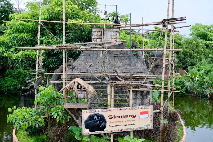 heytheregrace.com | Batu Secret Zoo, Jatim Park 2, Malang | Siamang