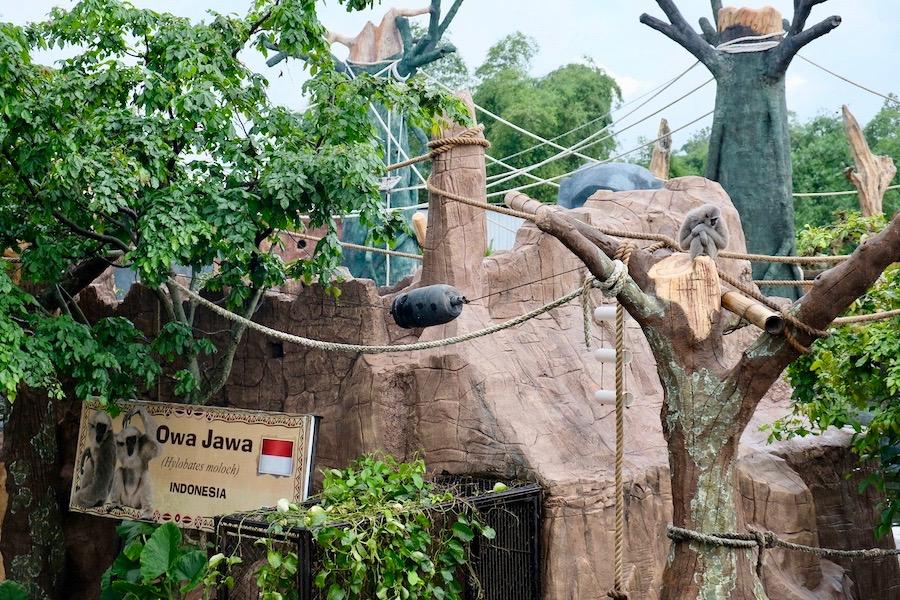 heytheregrace.com | Batu Secret Zoo, Jatim Park 2, Malang | Owa Jawa