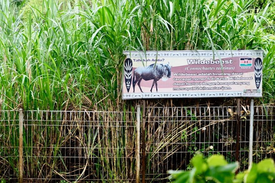 heytheregrace.com | Batu Secret Zoo, Jatim Park 2, Malang | Wildebeast