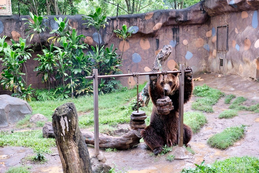 heytheregrace.com | Batu Secret Zoo, Jatim Park 2, Malang | Brown Bear