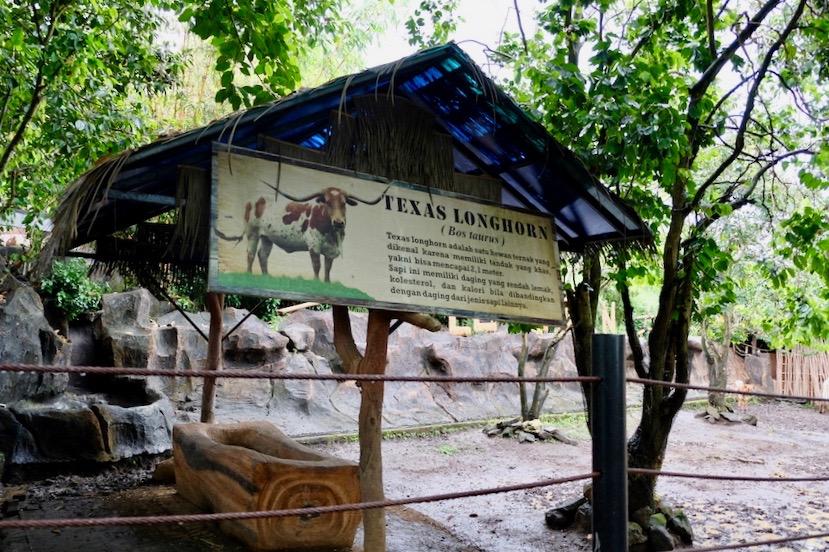 heytheregrace.com | Batu Secret Zoo, Jatim Park 2, Malang | Texas Longhorn