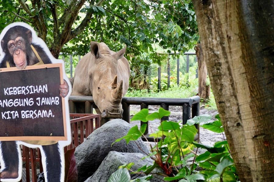 heytheregrace.com | Batu Secret Zoo, Jatim Park 2, Malang | Badak Putih