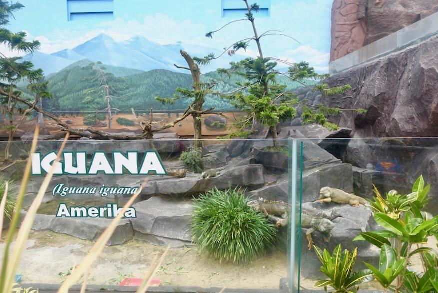 heytheregrace.com | Batu Secret Zoo, Jatim Park 2, Malang - Iguana