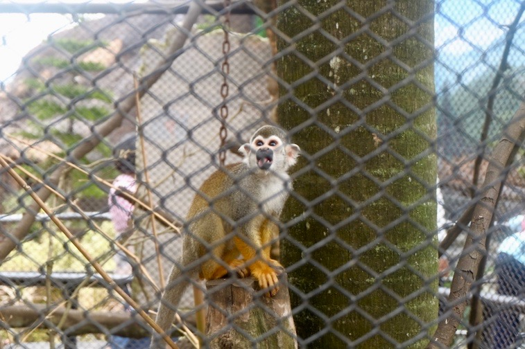heytheregrace.com | Batu Secret Zoo, Jatim Park 2, Malang - Squirrel Monkey