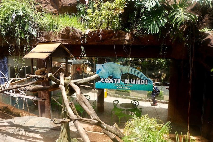 heytheregrace.com | Batu Secret Zoo, Jatim Park 2, Malang - Coati Mundi