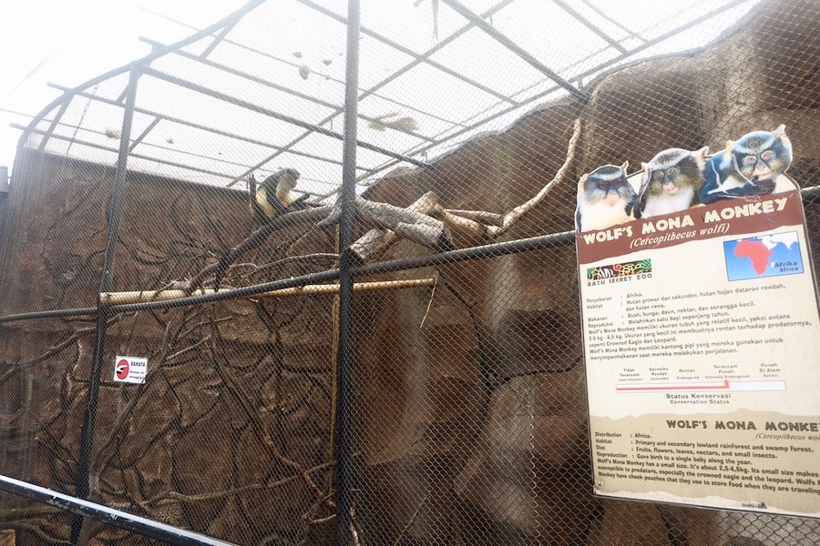 heytheregrace.com | Batu Secret Zoo, Jatim Park 2, Malang - Wolf's Mona Monkey