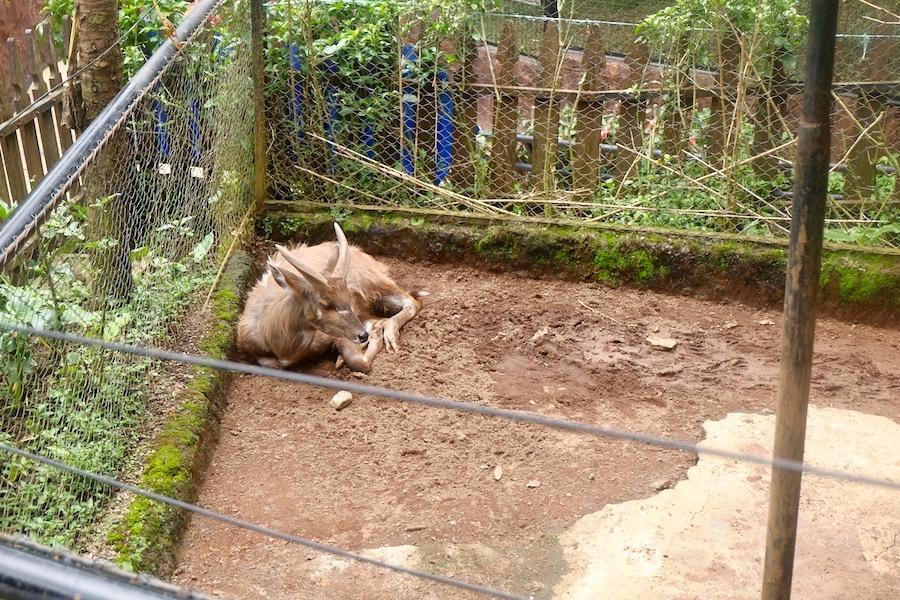 heytheregrace.com | Batu Secret Zoo, Jatim Park 2, Malang - Mara Patagonia