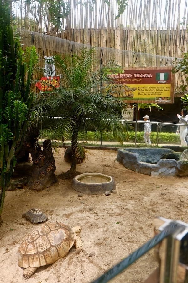 heytheregrace.com | Batu Secret Zoo, Jatim Park 2, Malang - Kura-kura sulcata