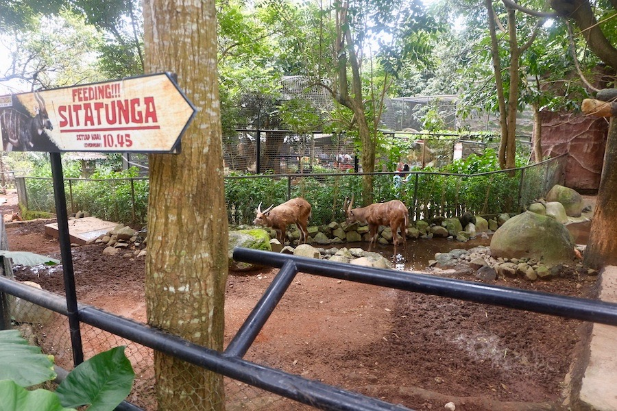 heytheregrace.com | Batu Secret Zoo, Jatim Park 2, Malang - Feeding sitatunga
