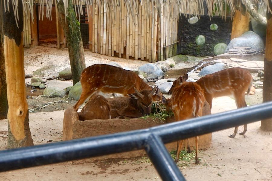 heytheregrace.com | Batu Secret Zoo, Jatim Park 2, Malang - Sitatunga