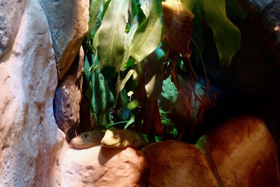 heytheregrace.com | Batu Secret Zoo, Jatim Park 2, Malang - New Reptile Garden