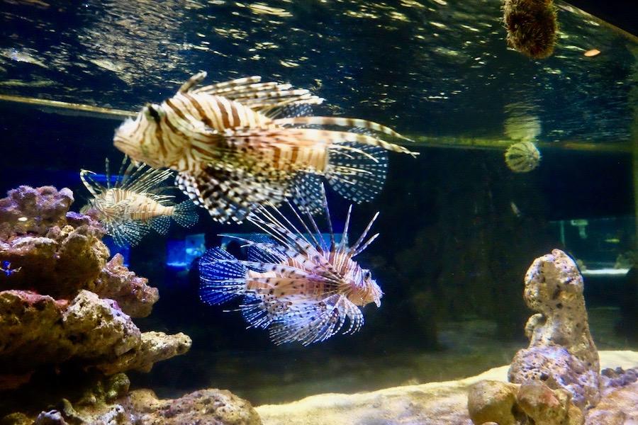 heytheregrace.com | Ikan di Batu Secret Zoo, Jatim Park 2, Malang
