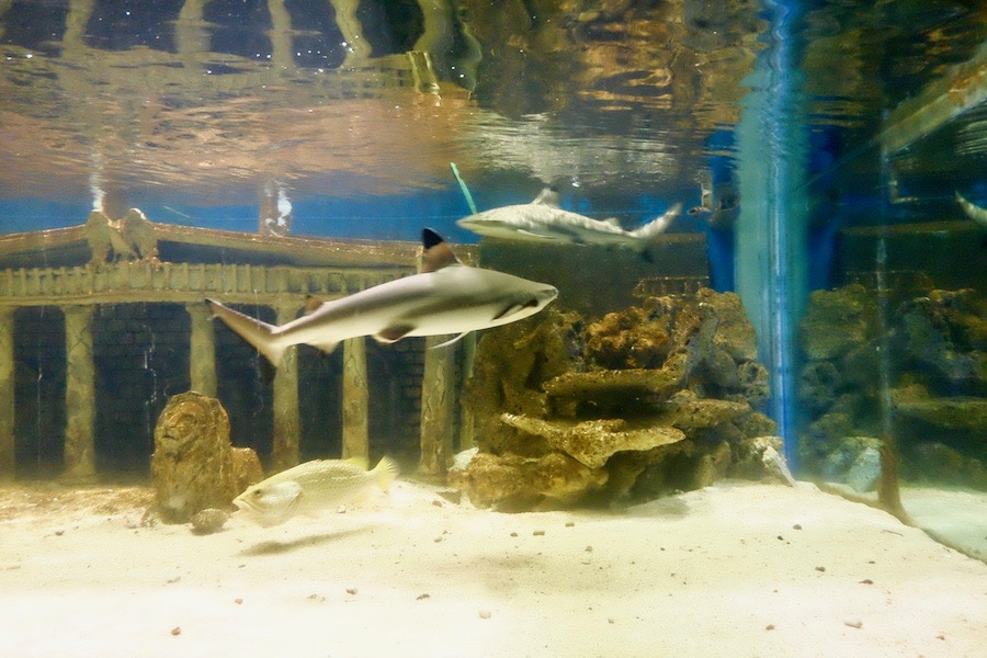 heytheregrace.com | Batu Secret Zoo, Jatim Park 2, Malang - Ikan Hiu