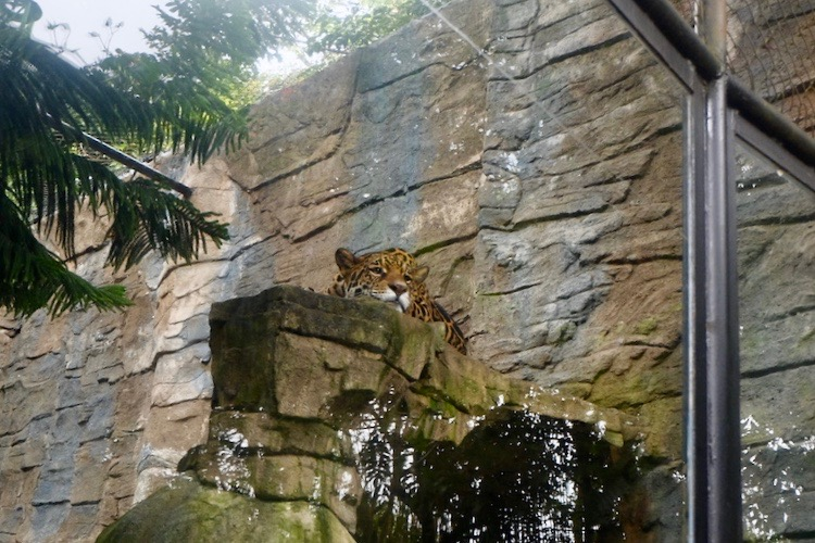heytheregrace.com | Batu Secret Zoo, Jatim Park 2, Malang - Sleepy Tiger